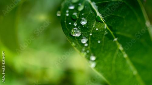 Fototapeta Water drops on green leaf background obraz na płótnie