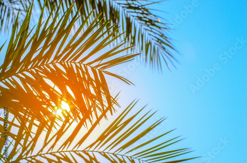 Obraz Palm tree on blue sky - fototapety do salonu