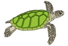 Vector Illustration. Realistic Design. Sea Turtle With Green Shell. Marine Inhabitants. Children's Illustration.