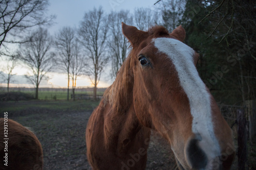 horse farm in Netherlands