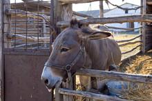 Donkey Farm Close-up Photo Of ...