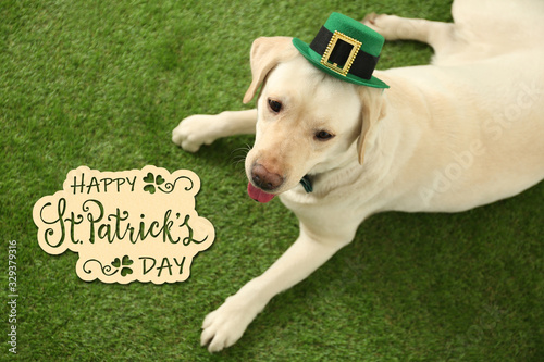 fototapeta na drzwi i meble Labrador retriever with leprechaun hat on green grass, above view. St. Patrick's day