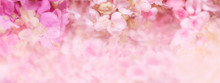 Floral Background. Banner With Delicate Pink Flowers