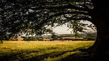 In The Shade Of A Tree During Spring In The English Countryside