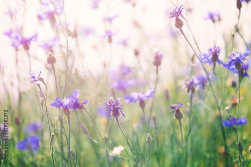 Tela Wild flowers on sunny meadow in spring