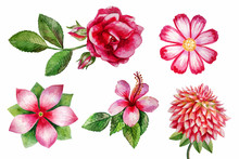 Watercolor Flowers Painting Il...