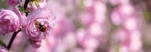 Ladybug On Pink Tender Flowers...