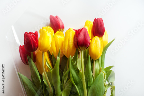 Fototapety, obrazy: yellow and red tulips on a white background