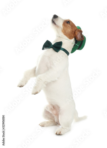 fototapeta na drzwi i meble Jack Russell terrier with leprechaun hat and bow tie on white background. St. Patrick's Day