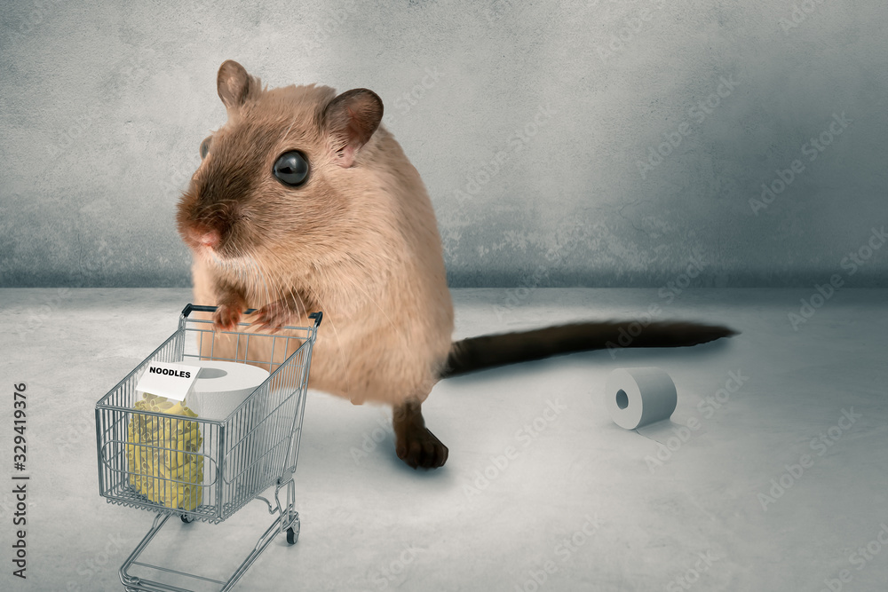 Fototapeta hamster buying in panic the supermarket empty - 3D-Illustration hamster buys pasta and toilet paper in panic 3D-Illustration.