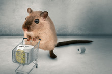 Hamster Buying In Panic The Su...