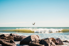 Pelican Flying Over Breaking Ocean Waves