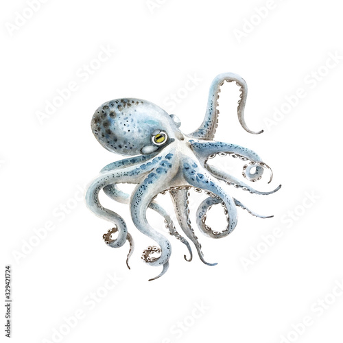 Obraz na płótnie blue octopus watercolor illustration on a white background