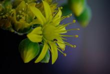 Macro Photography. Little Ant ...