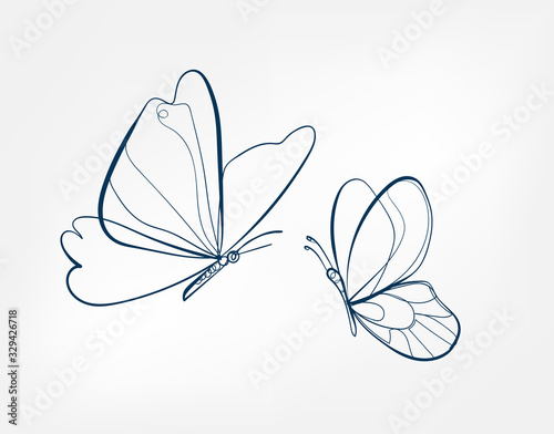 Fotomural butterfly insect vector art line isolated doodle illustration