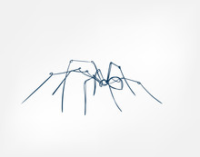 Spider Vector Art Line Isolate...