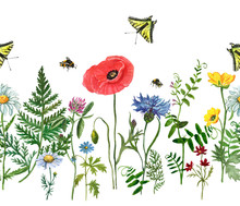 Watercolor Wild Flowers Seamless Border. Hand Drawn Floral Field Background. Poppy, Blue Cornflower, Clover, Cosmos, Daisy, Green Forest Herbs, Mouse Peas, Buttercups. Botanical Illustration
