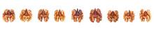Set Of Various Kernel Walnuts ...