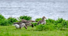 Loire-Atlantique, France: Wild...