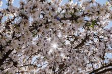 Sunbeam Through The Branches O...