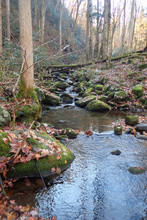 Small Stream In The Smokies