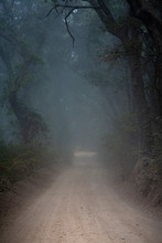 Misty Forest Road In Fog