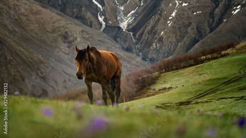Fototapeta Beautiful horse going up the hill on the green meadow in the mountains obraz