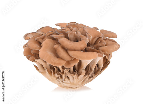 maitake mushrooms isolated on white background Fototapet