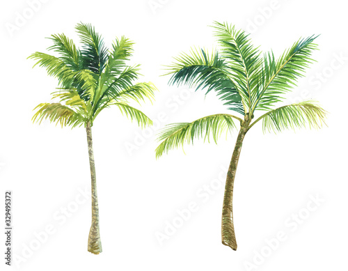 Photo finished image of two palm trees on a white background, watercolor