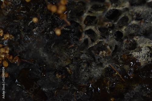 Vászonkép Stingless honey bee. Australian Native Stingless Bee hive
