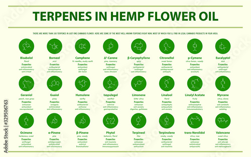 Terpenes in Hemp Flower Oil with Structural Formulas horizontal infographic illustration about cannabis as herbal alternative medicine and chemical therapy, healthcare and medical science vector Canvas Print