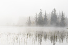 Misty Lake And Forest, Dalarna...