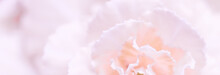 Abstract Floral Background, Pa...