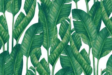Naklejka Liście Fresh green banana leaves on white background. Tropical greenery seamless pattern