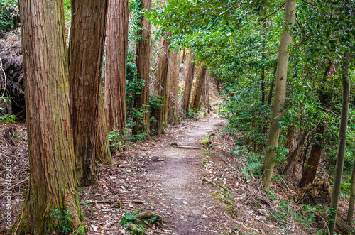 Photo 京都の大文字山登山道