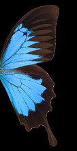 Macro Wing Of Blue Emperor Butterfly Isolated On A Black Background