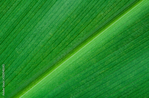 Natural background of green leaf - 329540343