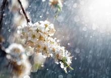 Spring Rain In The Garden