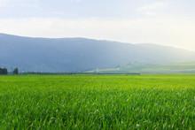 Vibrant Green Field Of Grass L...