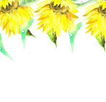 Sunflowers In Watercolor, Summ...