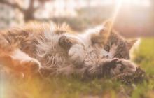 Little Fluffy Spotted Kitten P...