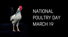 National Poultry Day. Rooster ...