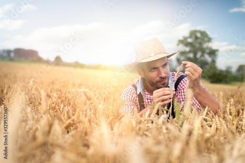 Fototapeta Caucasian farmer crouching in field checking crop obraz