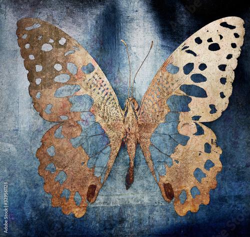 Obraz butterfly - fototapety do salonu