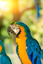 Cute Macaw Standing On A Branch.