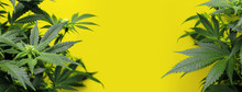 Banner Yellow Background With ...