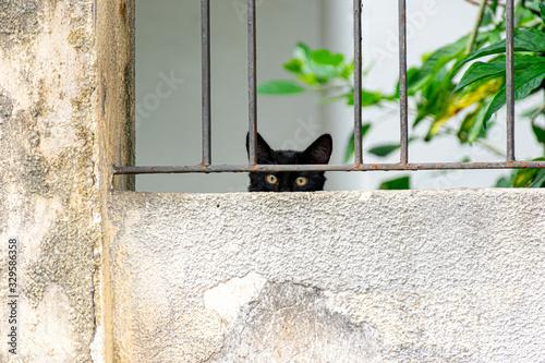 Photo gato preto