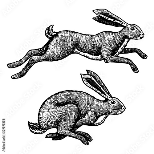 Valokuva Wild hares