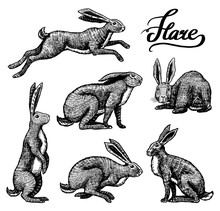 Wild Hares Set. Rabbits Are Si...