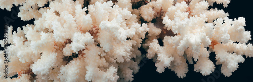 Photo Dry white corals on a dark background. Panorama.